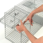 raccoon-traps